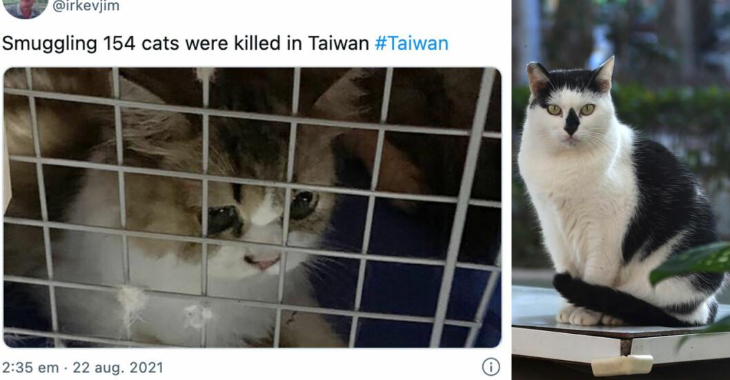 I Taiwan har 154 katter dödats efter att de smugglats in i landet. Ett beslut som får befolkningen att rasa.