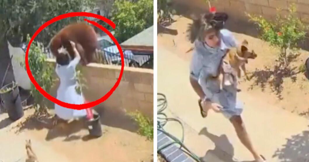 17-åring går till attack mot björnhona.