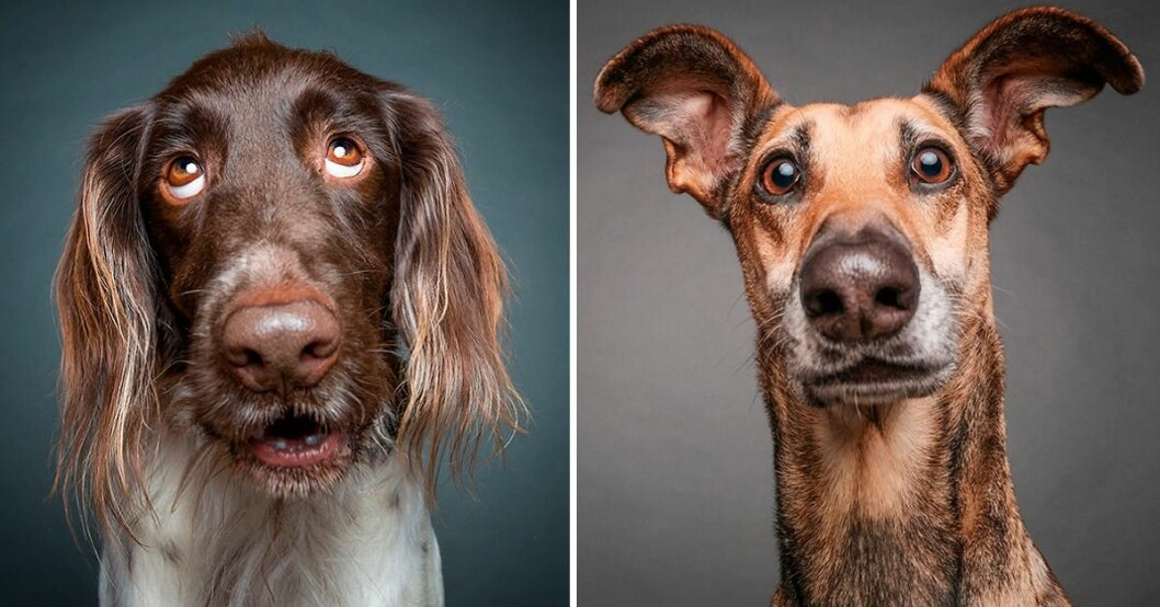 Hunden lika smart som ett yngre barn   Aftonbladet
