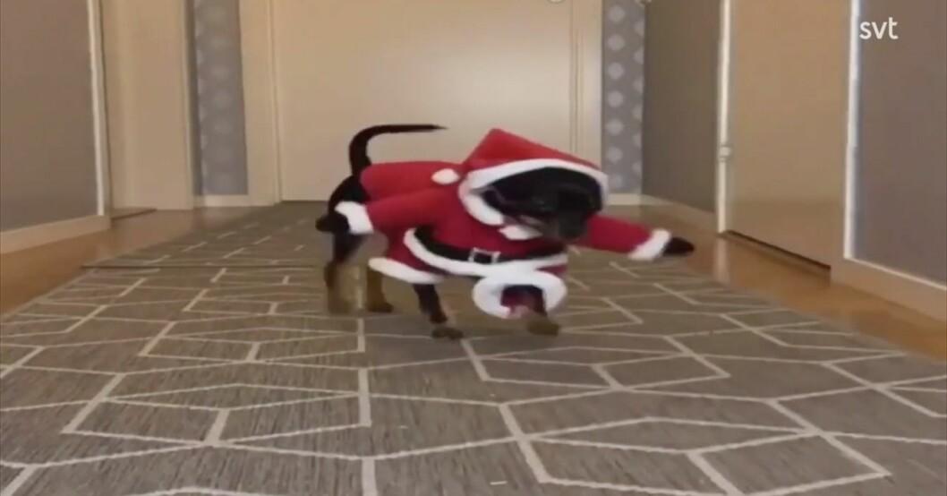 Hunden Winna