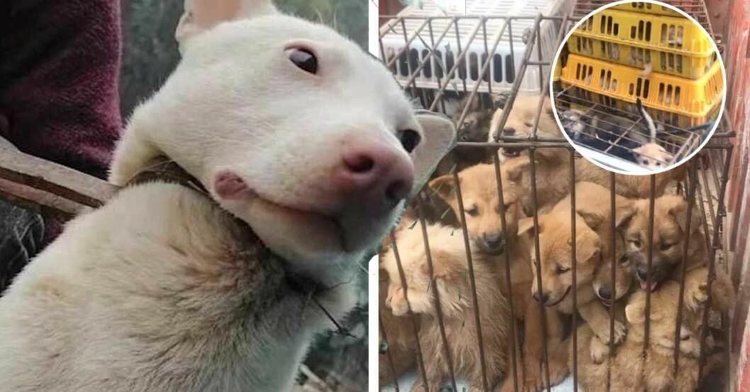 Hundfestivalen i Kina