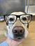 LillaNymo på jobbet med glasögon