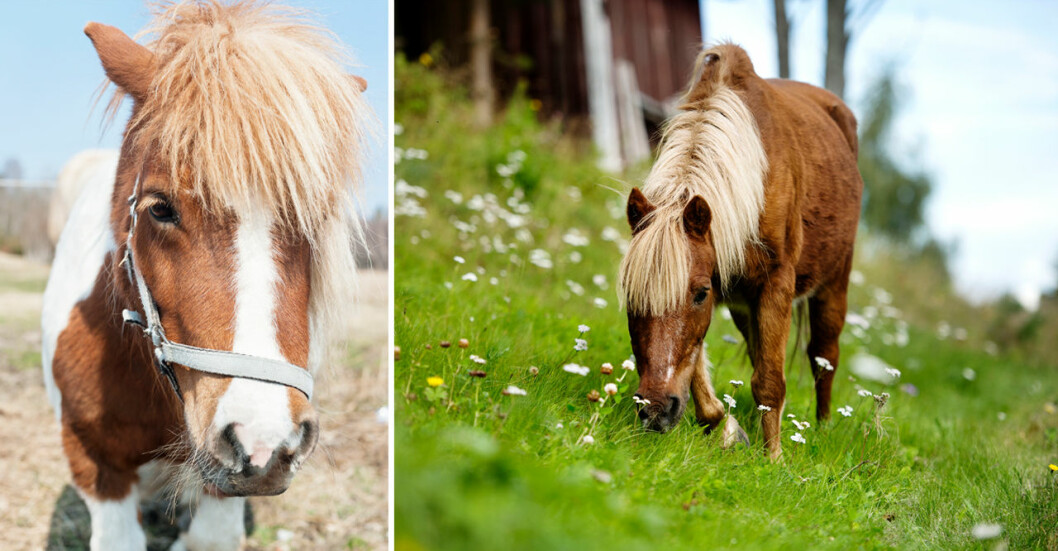 En ponny blev på söndagen utsatt för djurplågeri.