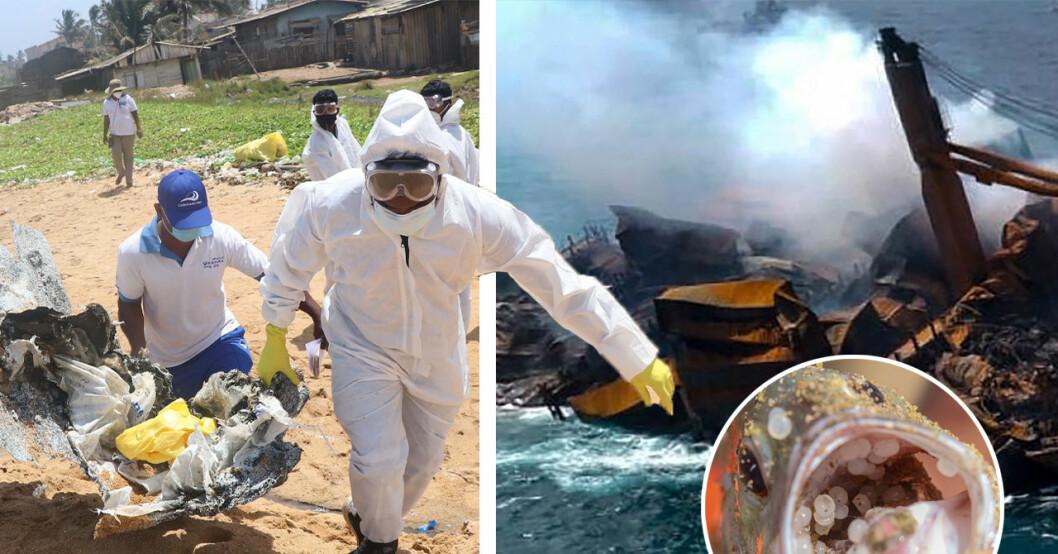 Sri Lanka-katastrofen