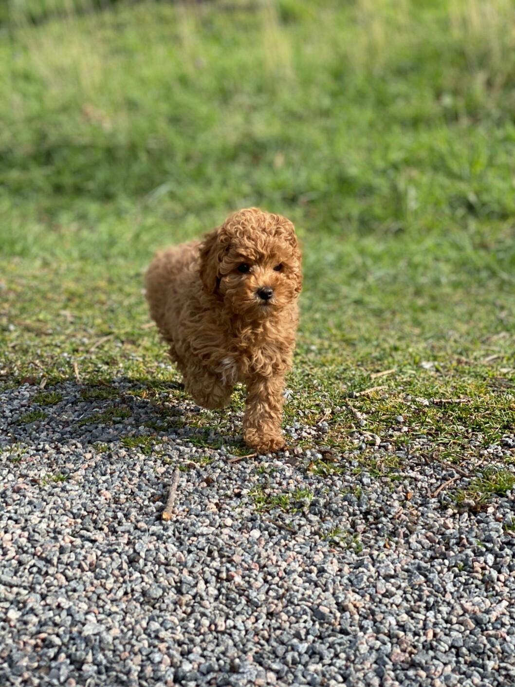 Hunden Rio